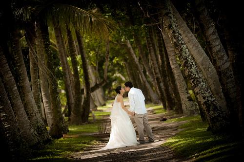 Rarotonga Forest