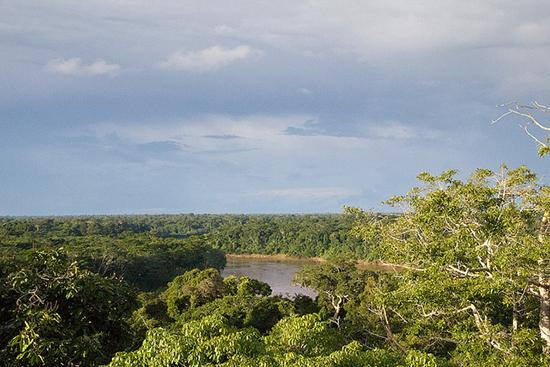 miki.o Amazon Peru