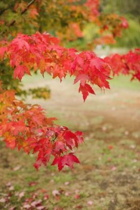 Autumn barn wedding0090