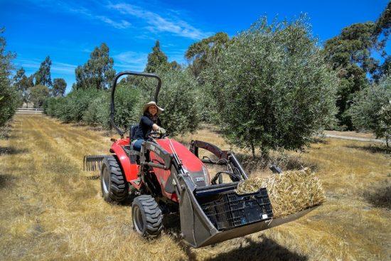 Low tractor Kallista - Olive Tree's-015
