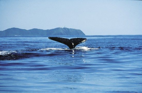 Whale-Watching-550x362