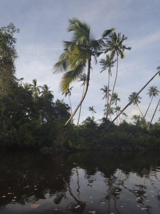Klias Wetlands 2