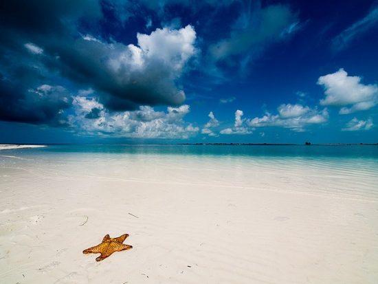 Starfish-Beach Boca del torro pin the map project