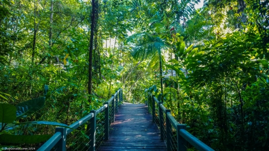 daintree-forest-silky-oaks-lodge-queensland-4