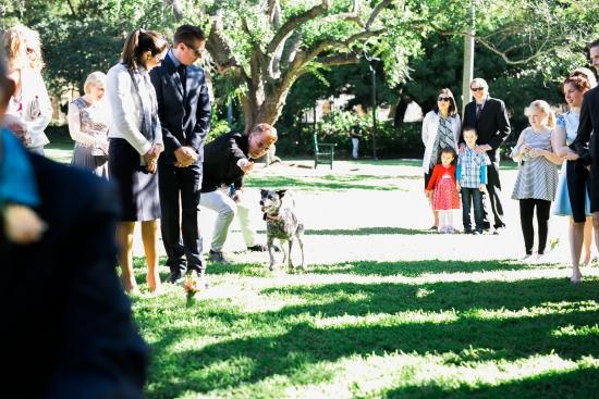 dog-friendly-wedding-with-brisbane-city-celebrants