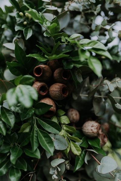 121728 madeleine aarons rustic intimate botanical gardens wedding by dani drury