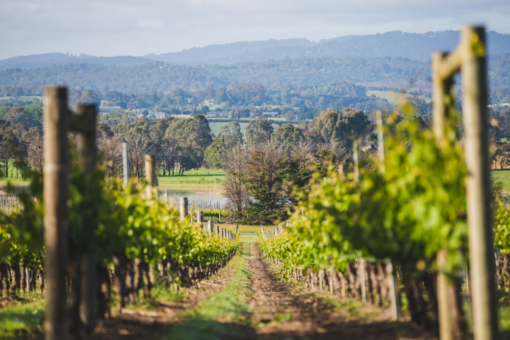 106061 simple lunchtime stones of the yarra valley wedding by twentyone photos