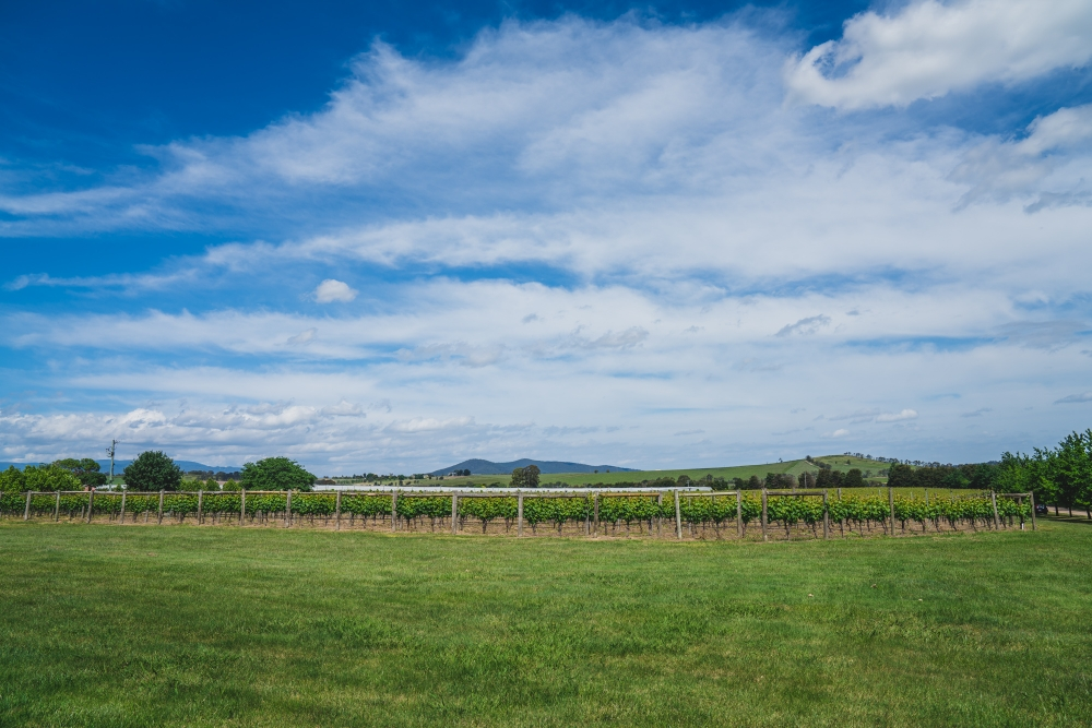106088 simple lunchtime stones of the yarra valley wedding by twentyone photos