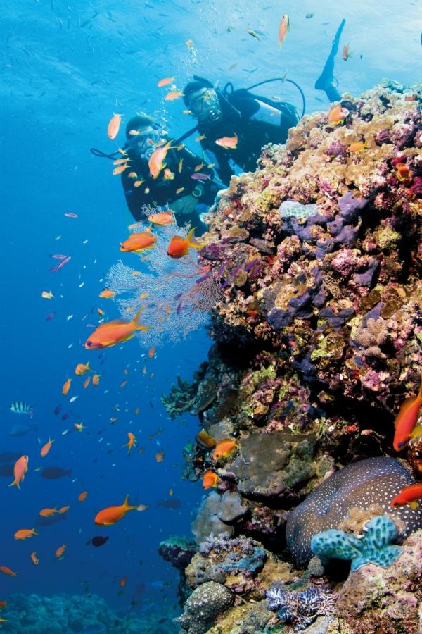 Reef diving. Image via Tourism Whitsundays